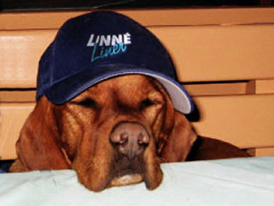 Linne-Liner-on-Tour-00072